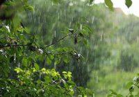Сегодня и завтра синоптики прогнозируют сильный дождь в сочетании с грозой и шквалистым ветром