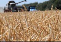 завершилась уборка зерновых культур