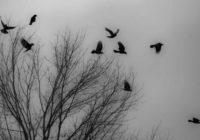 Причину гибели птиц